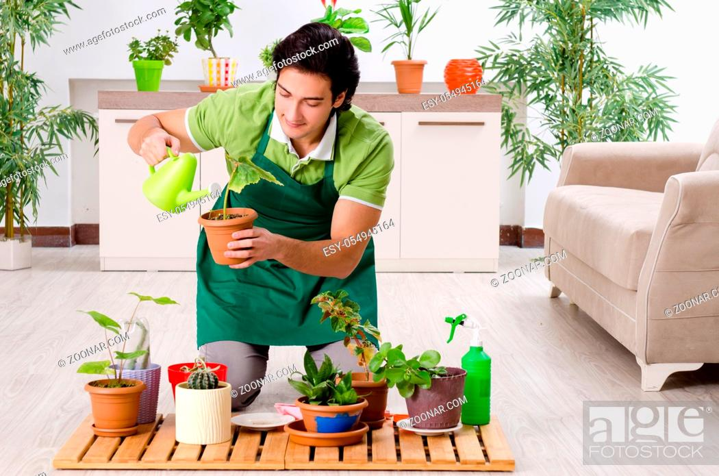 Stock Photo: Young male gardener with plants indoors.