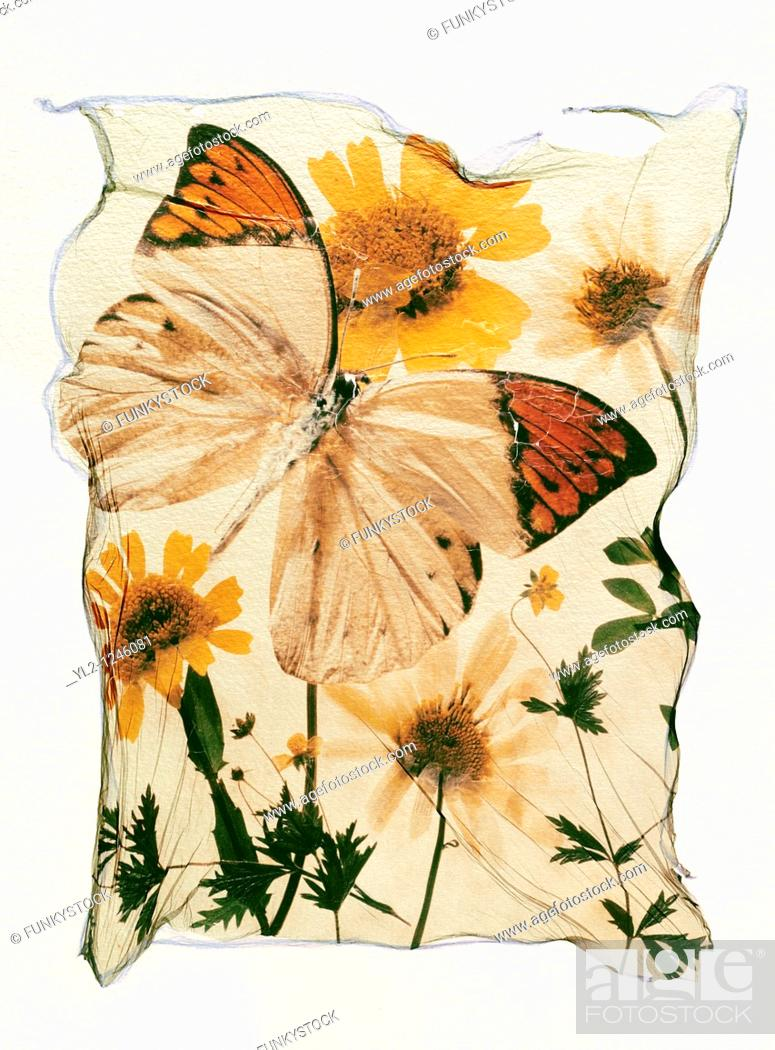 Stock Photo: Orange tipped butterfly with wild pressed flowers in a graphic arrangement - Polaroid lift.