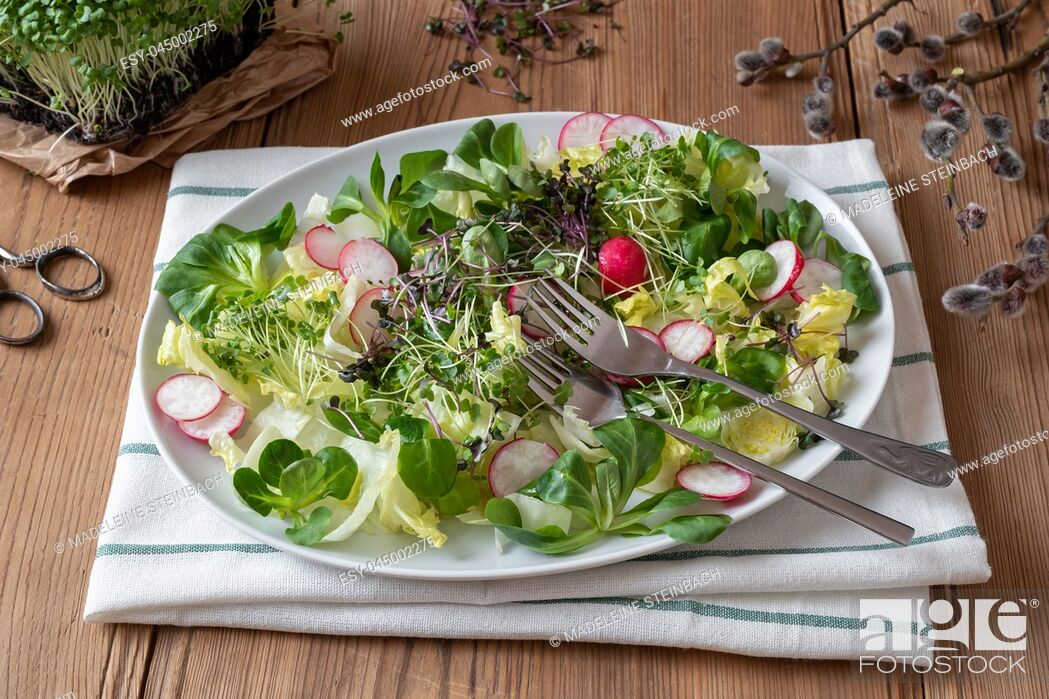 Stock Photo: Salad with radishes and freshly grown broccoli and kale microgreens.