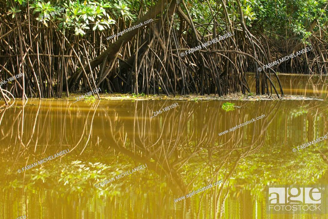 Imagen: Mangrove forest mirrored in a water channel in Turuepano National Park, Eastern Venezuela.