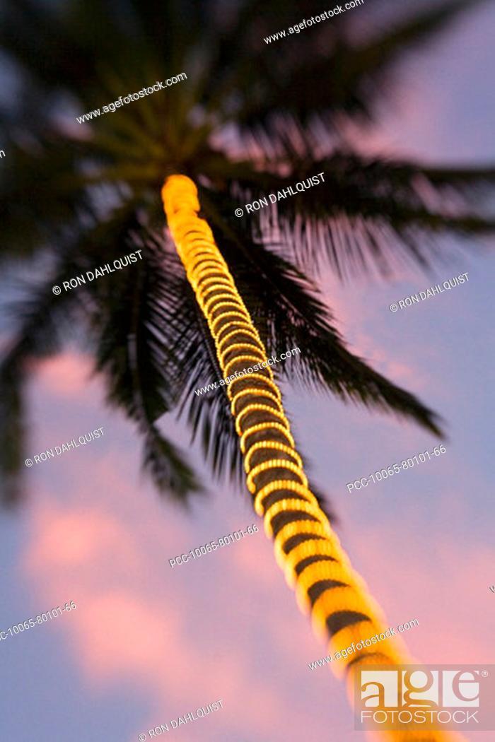 66 Palm Tree