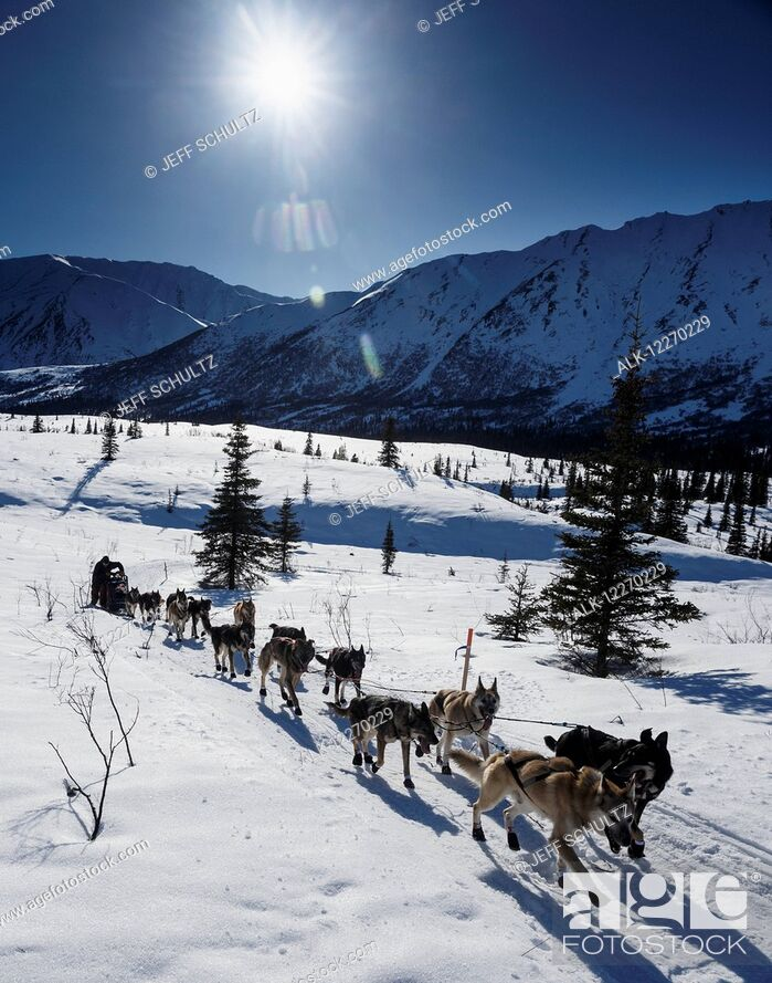Imagen: Richie Diehl on the trail between the Rainy Pass checkpoint and Rohn during Iditarod 2014.