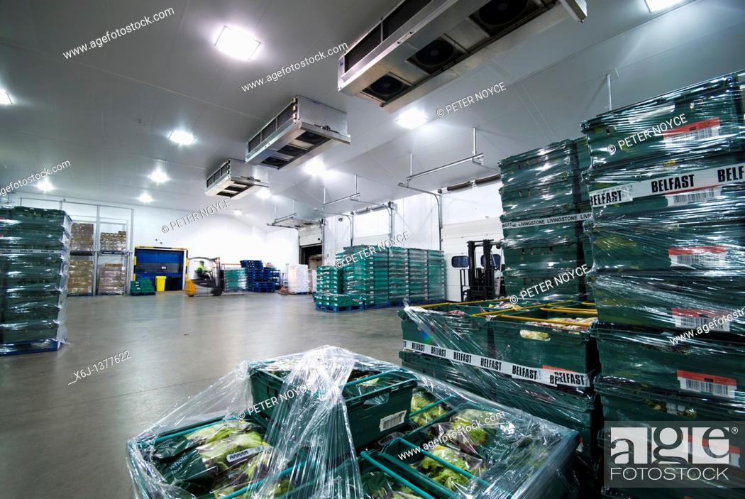 Stock Photo: Salad crop distribution warehouse.