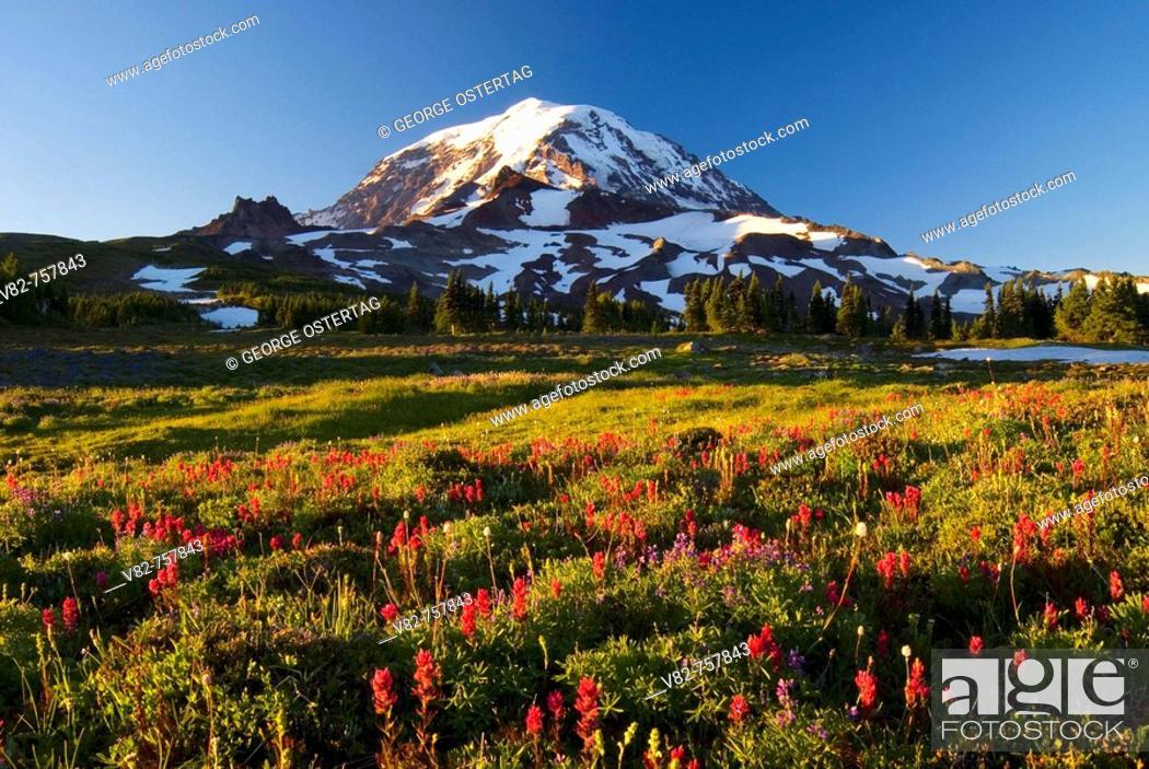 Stock Photo: Mt Rainier from Spray Park, Mt Rainier National Park, Washington, USA.