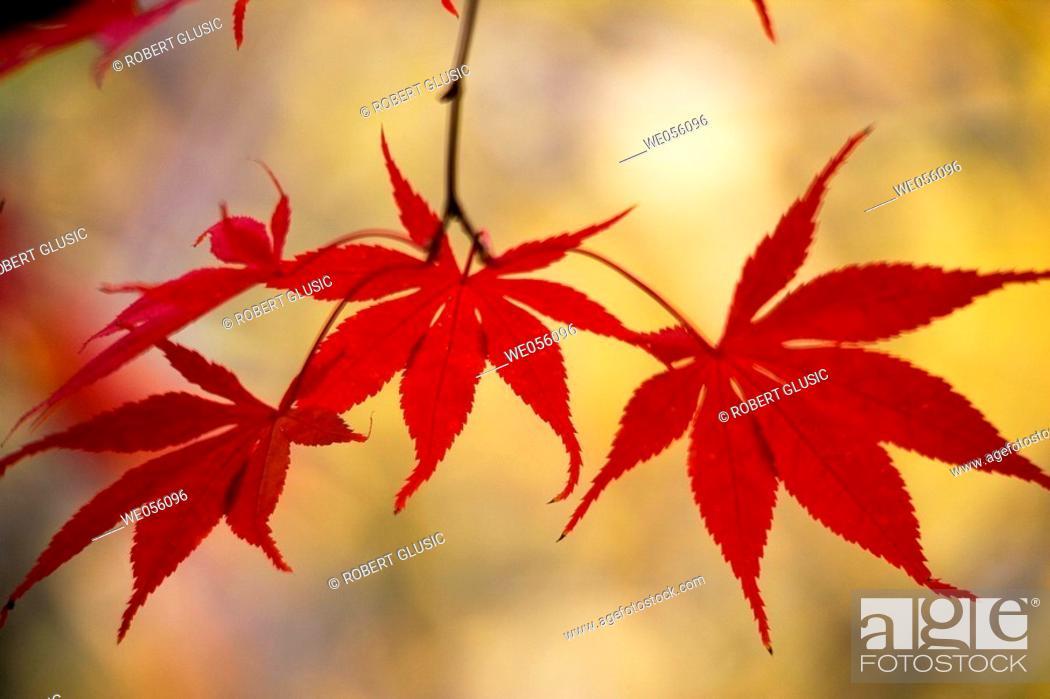 Stock Photo: Fall leaves, Lithia Park. Ashland, Oregon, USA.