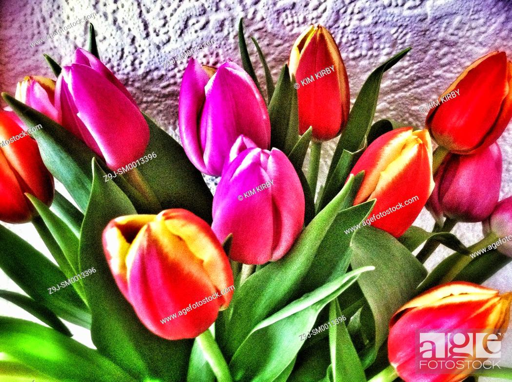 Stock Photo: Close up of tulips in a vase.