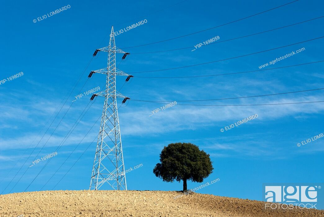 Stock Photo: Electricity pylon and tree in cultivated field  Umbria, Italy.