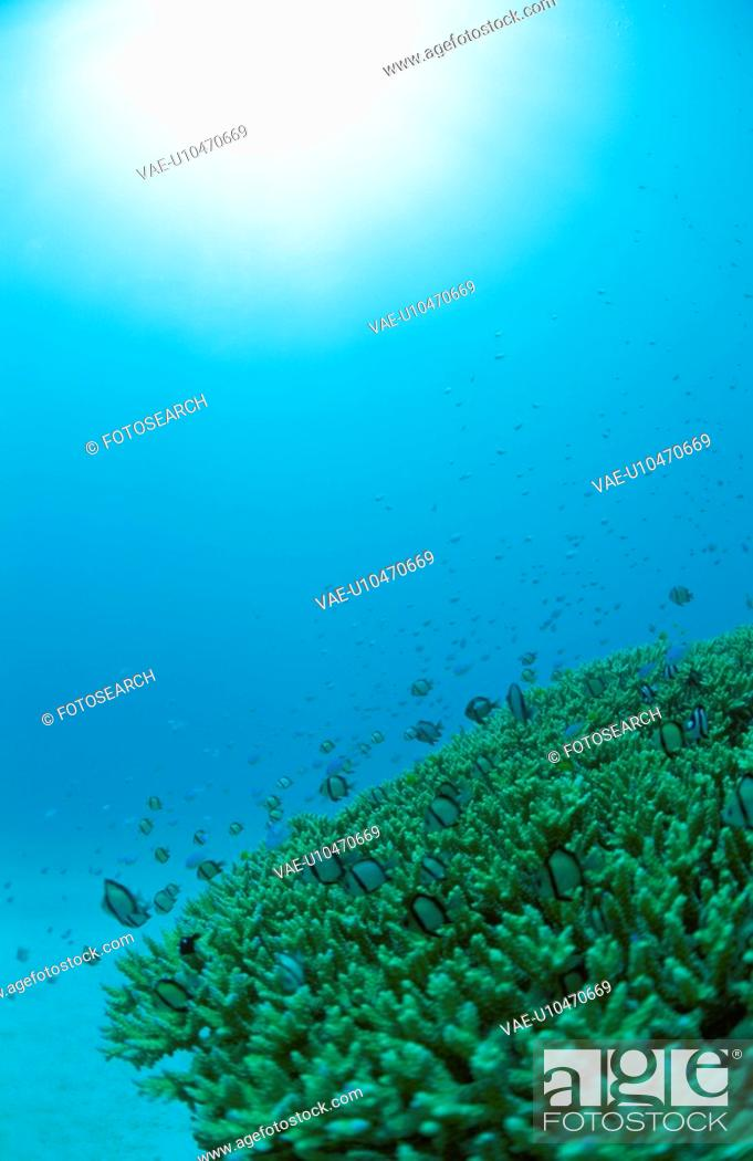 Stock Photo: Coral Reef.