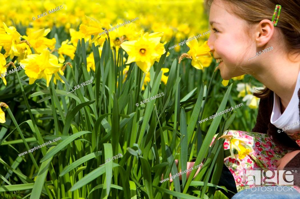 Stock Photo: Young girl smelling yellow daffodils.