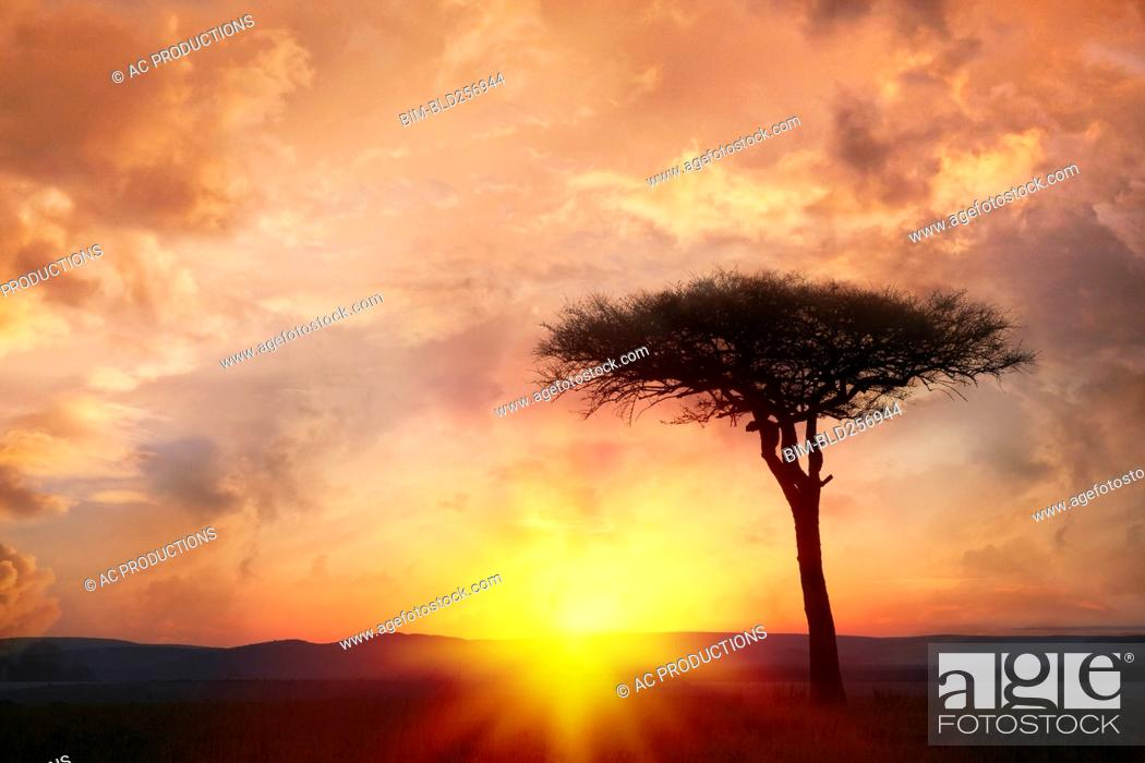 Stock Photo: Silhouette tree at sunset.