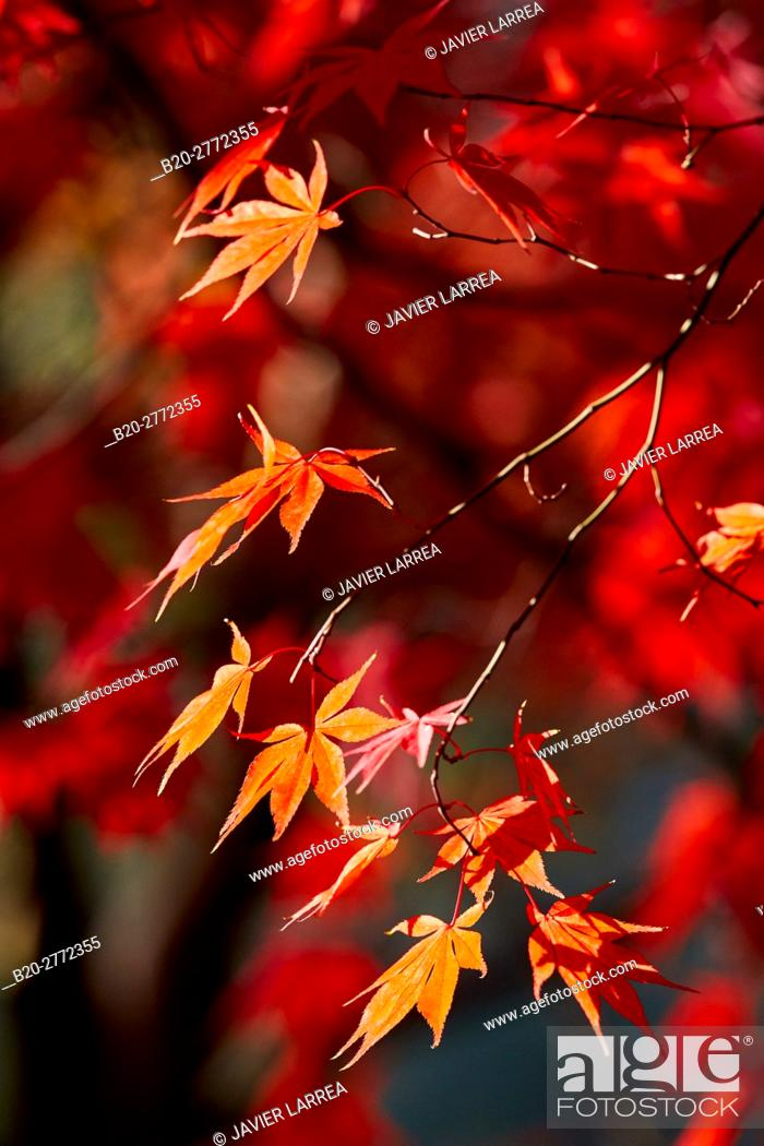 Stock Photo: Trees in Autumn, Pagoetako Parke Naturala, Pagoeta Natural Park, Aya, Gipuzkoa, Basque Country, Spain, Europe.