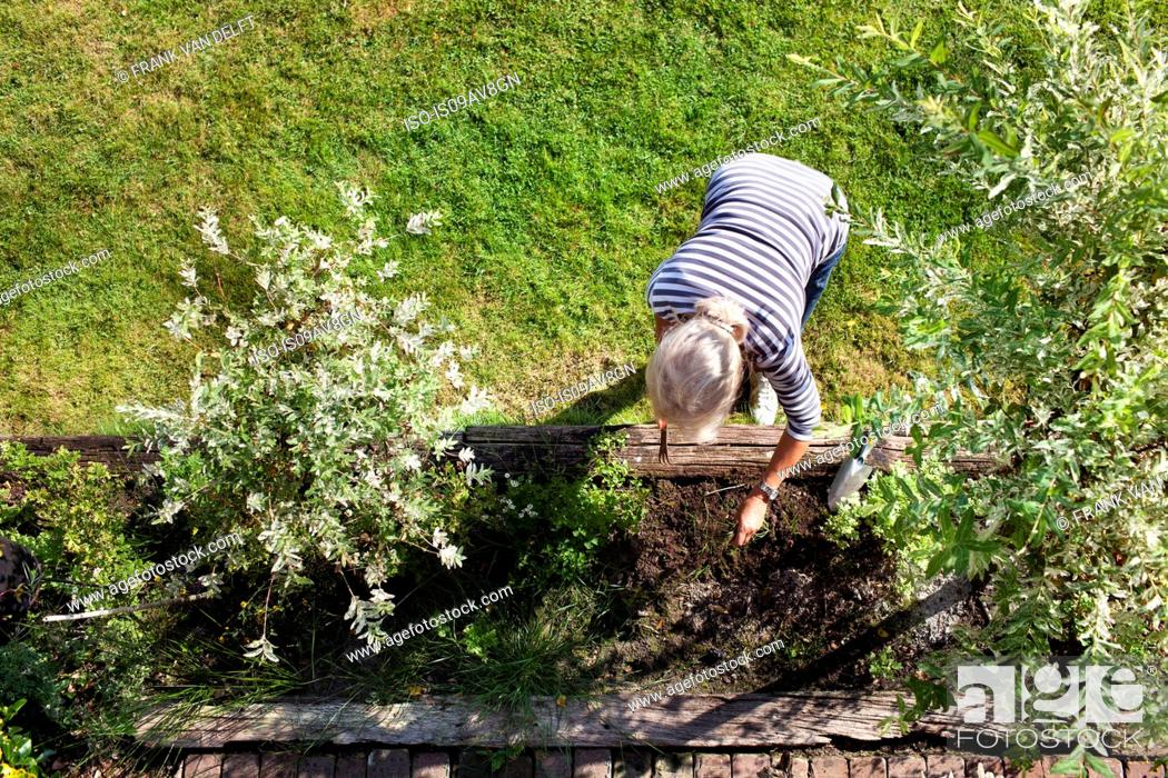 Imagen: Senior woman, gardening, overhead view.
