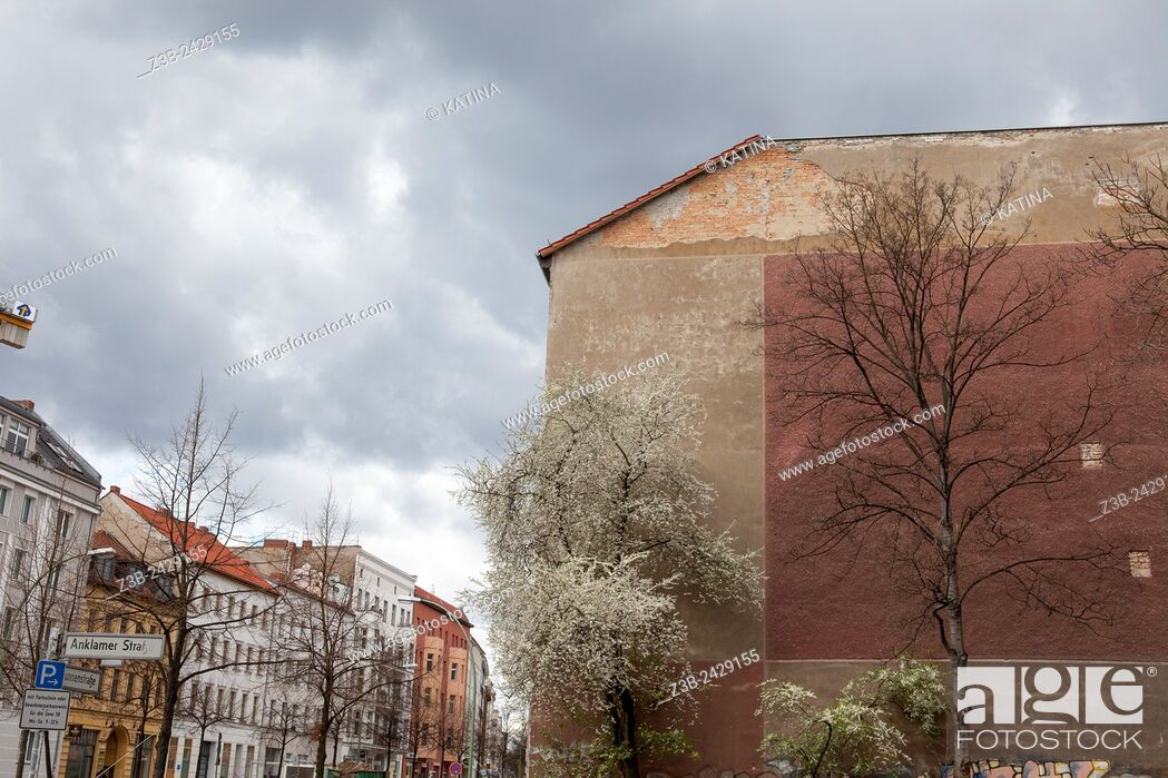 Imagen: Nature and architecture on Anklamer Street Berlin, Germany, Europe.