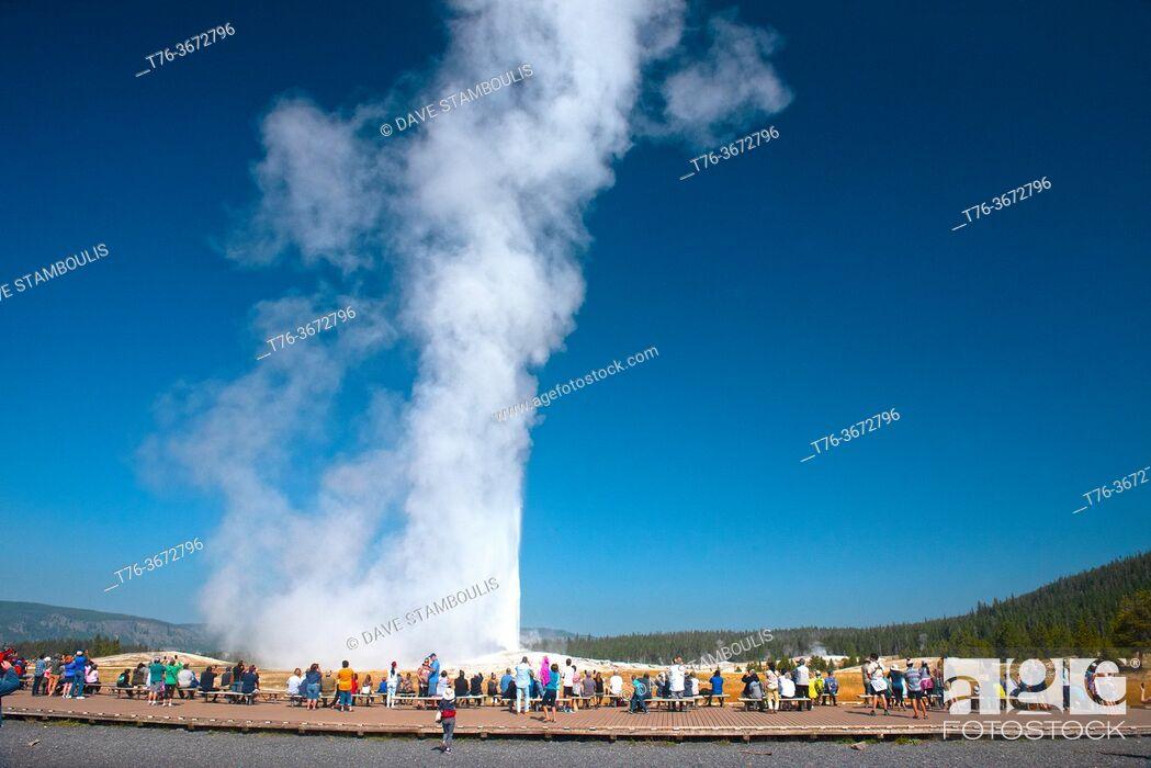 Stock Photo: Old Faithful erupting, Upper Geyser Basin, Yellowstone National Park, Wyoming, USA.