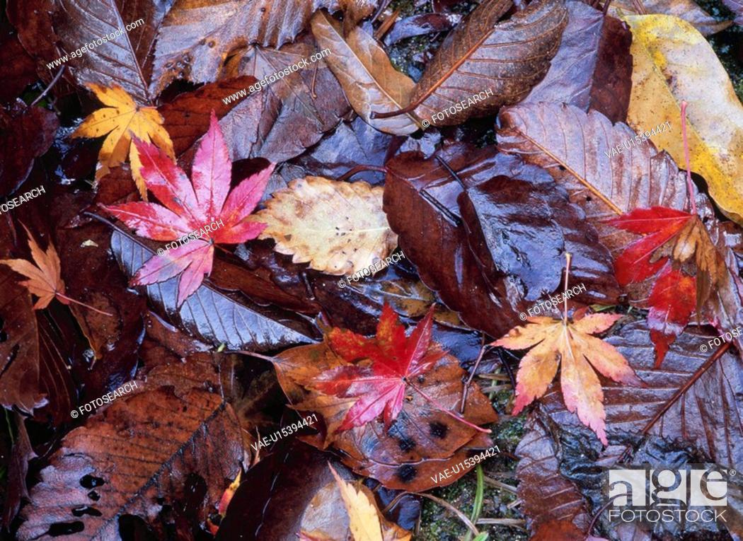 Stock Photo: Fallen Leaves.