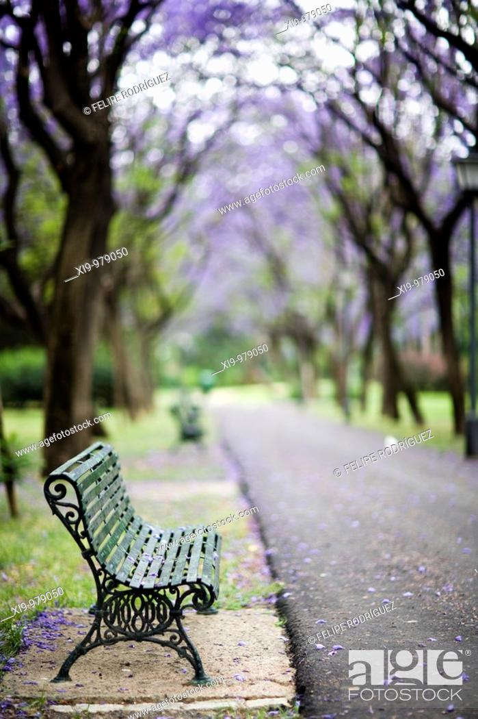 Stock Photo: Empty bench in a park, Seville, Spain.