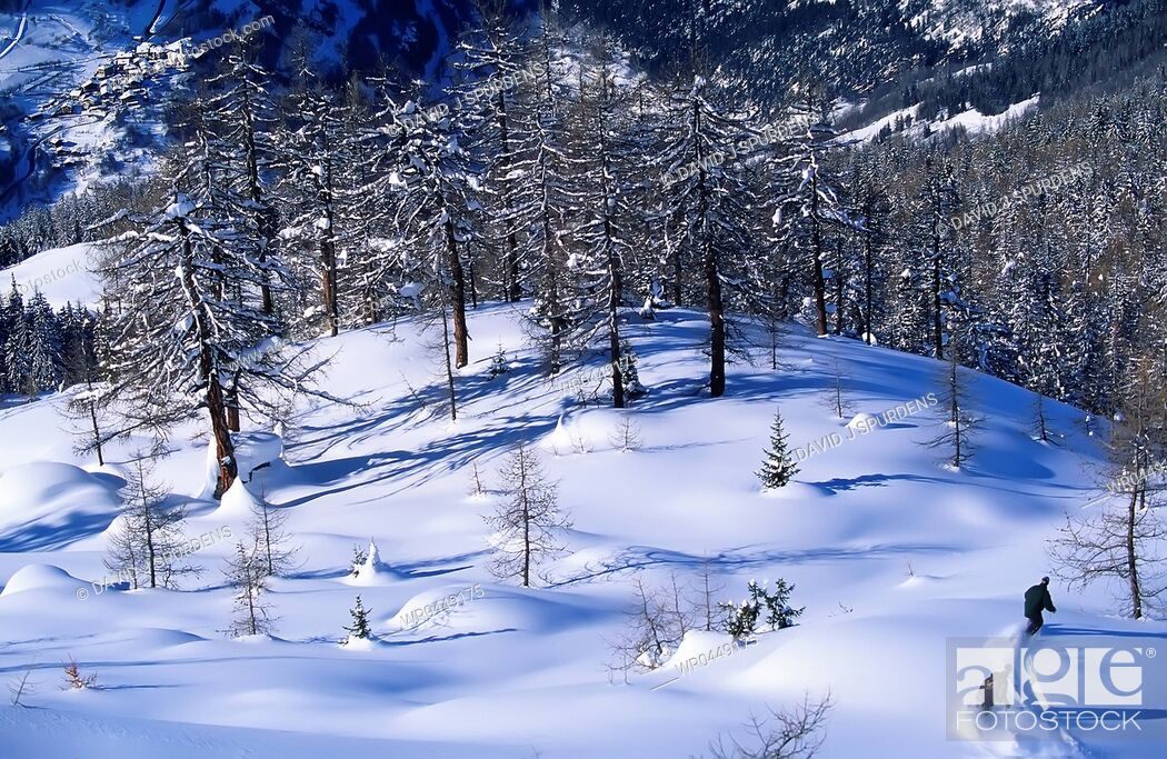 Stock Photo: Two snowboarders riding fresh powder through a snowy forest.