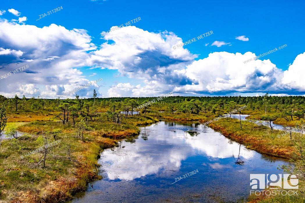 Imagen: Kemeri Bog Trail, Kemeri National Park, Latvia, Baltic States, Europe.