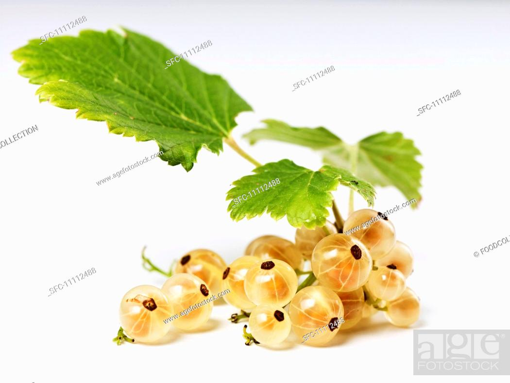 Stock Photo: White currents with leaves.