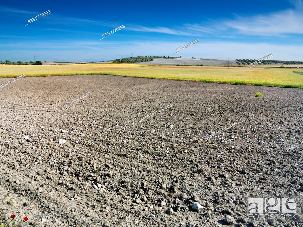 Stock Photo: Country in El Arenal. Pinto. Madrid. Spain. Europe.