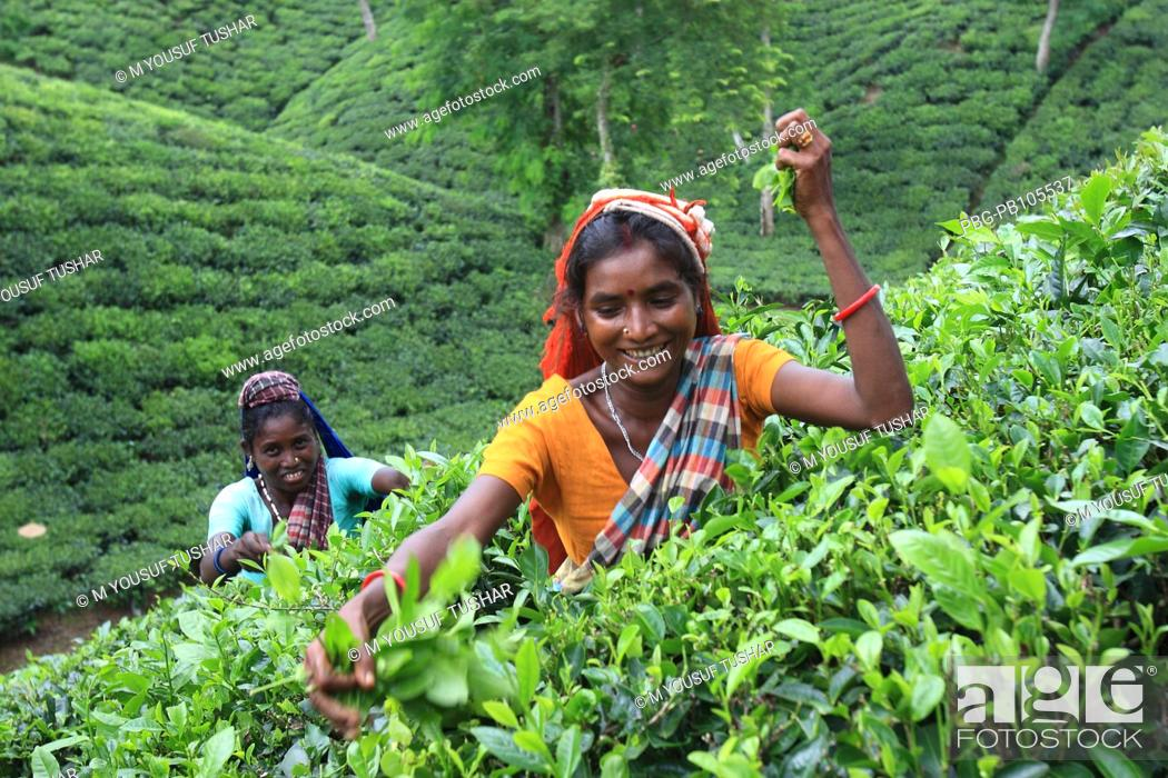 tea industry in bangladesh Tea industry in bangladesh: marketing system and price behaviour 83 article of association finally, director's bio-data, staff & officers position, full list of office.