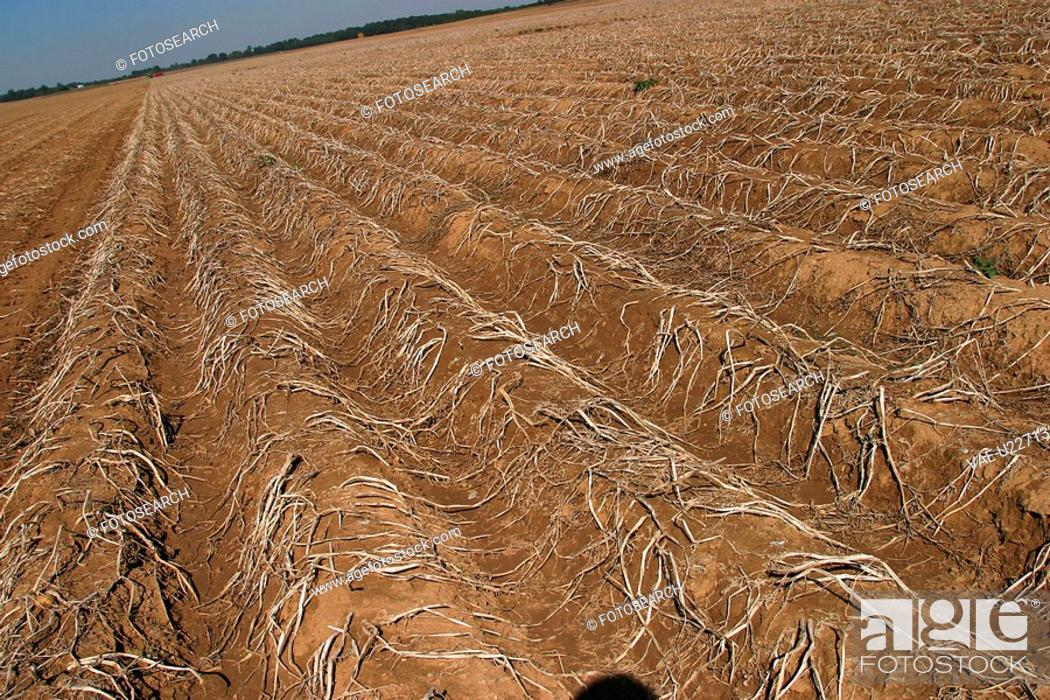 Stock Photo: field, cultivated, outdoors, daytime, barren, arid.
