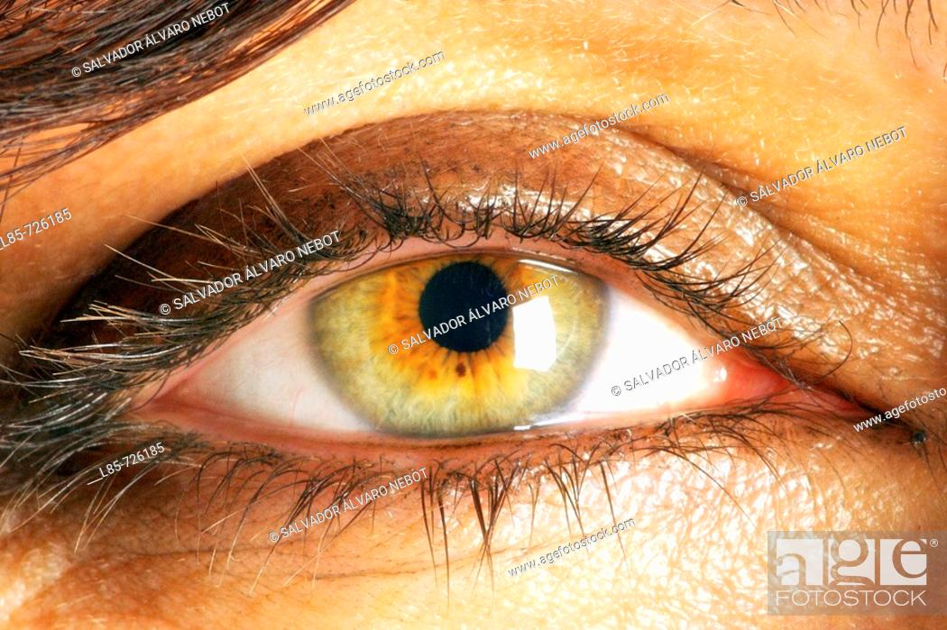 Imagen: Retina.