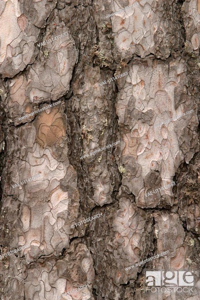 Stock Photo: cracks, old, cracked, tree, tree bark, bark.
