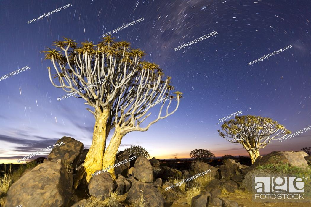 Stock Photo: Milky Way over Quivertree Forest at Night, Aloidendron dichotomum, Keetmanshoop, Namibia.
