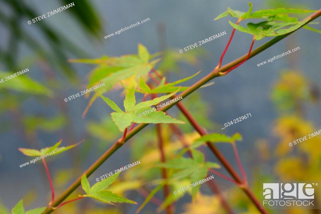 Stock Photo: Leafy.