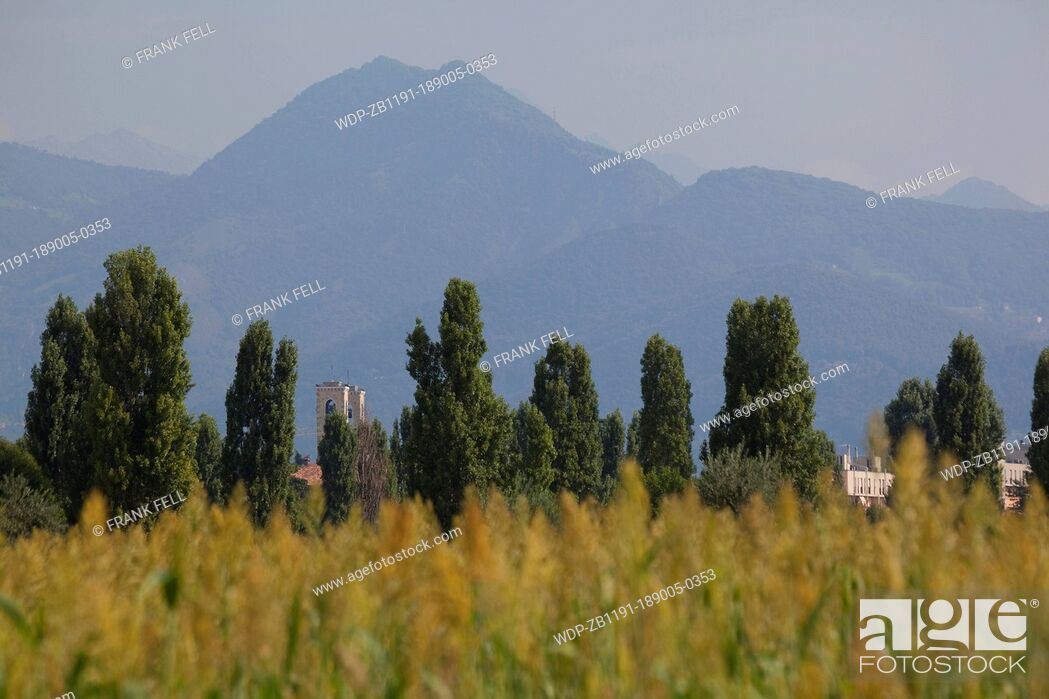 Imagen: Italy, Lombardy, Bergamo, Corn Field & Mountains.