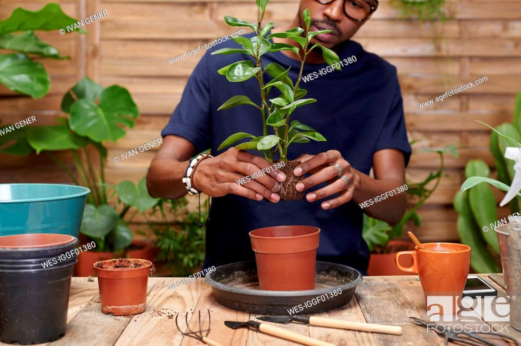 Stock Photo: Young man repotting a plant on his terrace.
