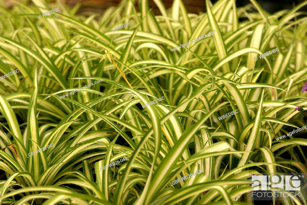 Stock Photo: Flowers, plants, garden.