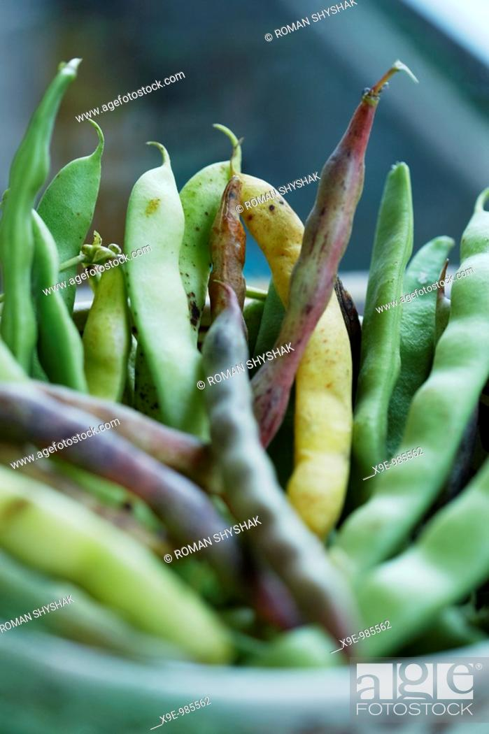 Stock Photo: A picture of different pods of bean in the bowl.
