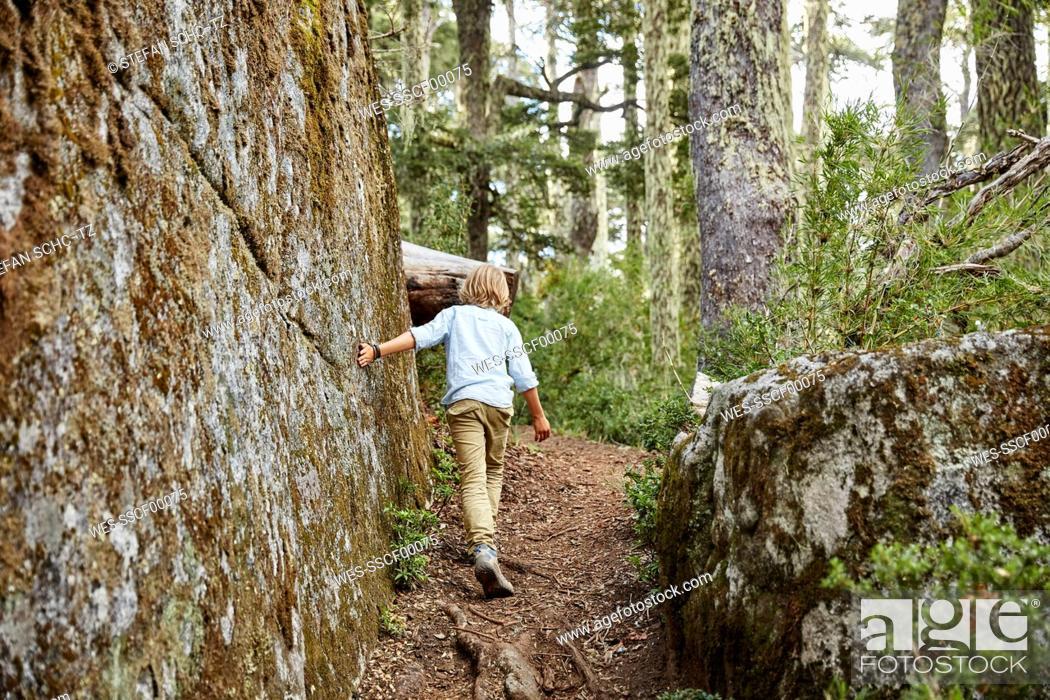 Photo de stock: Chile, Puren, Nahuelbuta National Park, boy passing boulder in an Araucaria forest.