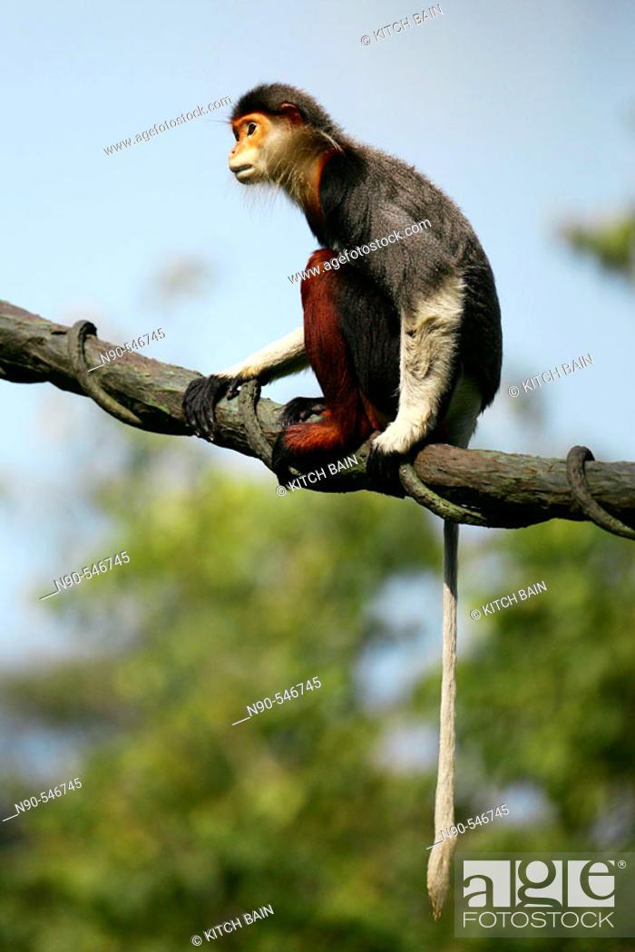 Stock Photo: Monkey.