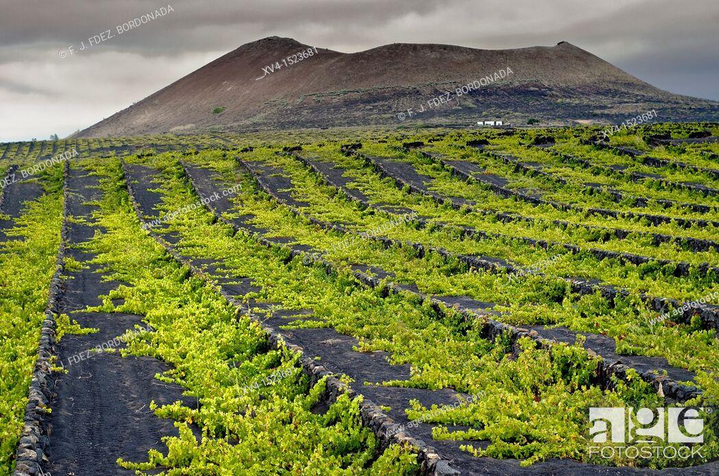 Stock Photo: La Geria, winegrowing area  Lanzarote  Canary Islands, Spain.