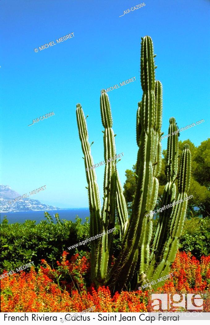 Stock Photo French Riviera Cactus Saint Jean Cap Ferrat