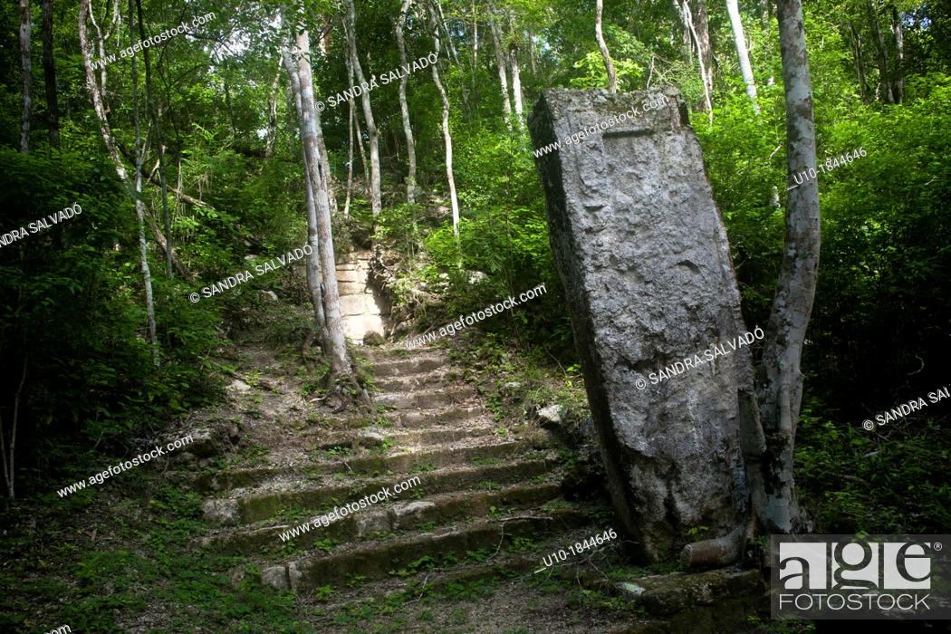 Stock Photo: Archeological site Calakmul, Yucatan Peninsula, Mexico.