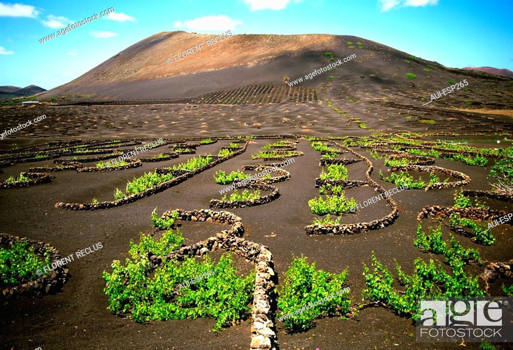 Stock Photo: Spain - Canary Islands - Lanzarote - Vine.