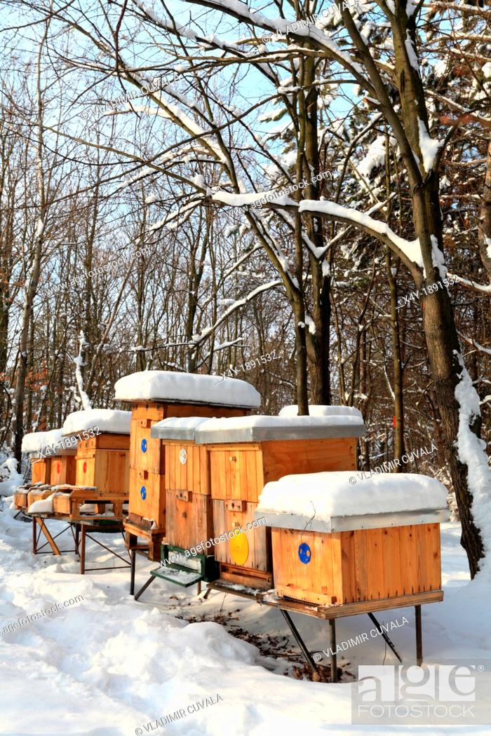 Stock Photo: Apiary with wooden beehives on a sunny winter day, Male Karpaty, Slovakia.