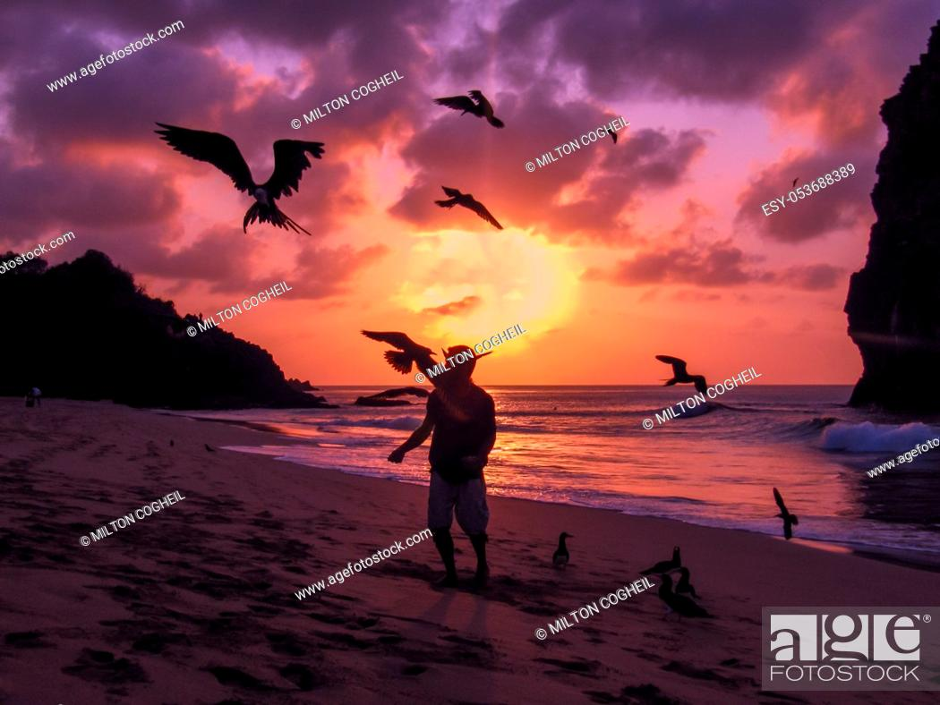 Stock Photo: Flying Frigate birds being fed by hand on a beach on the island of Fernando de Noronha, Brazil.