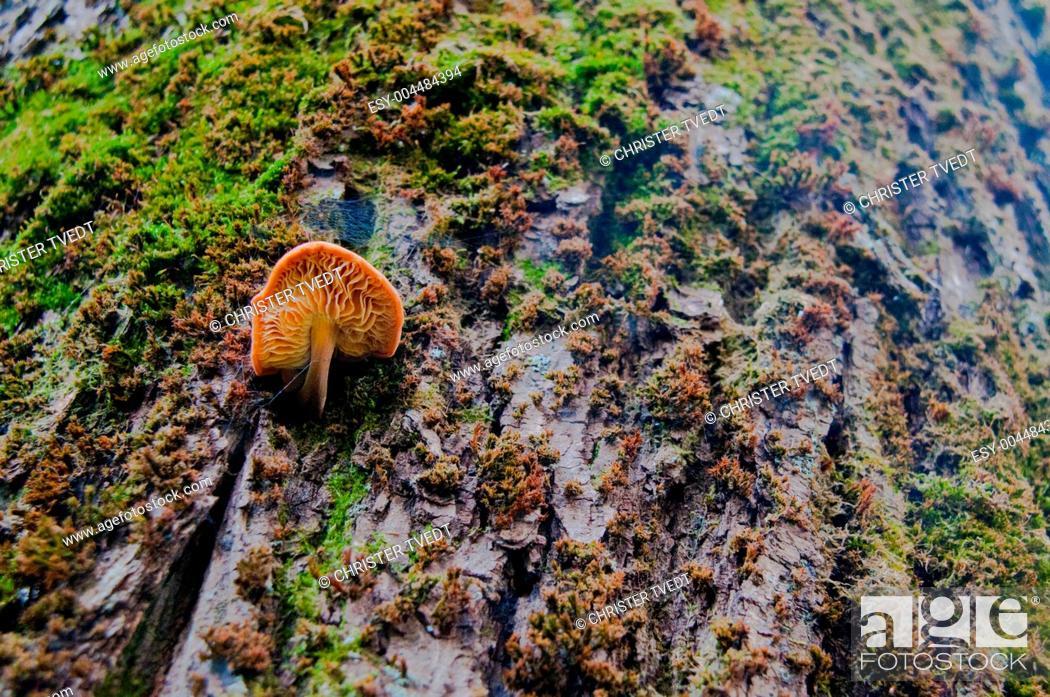 Stock Photo: Mushroom on a tree.