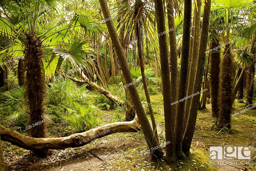 Stock Photo: Trees, Botanical gardens of Chateau de Vauville, , Cotentin, 50, Normandy, France.