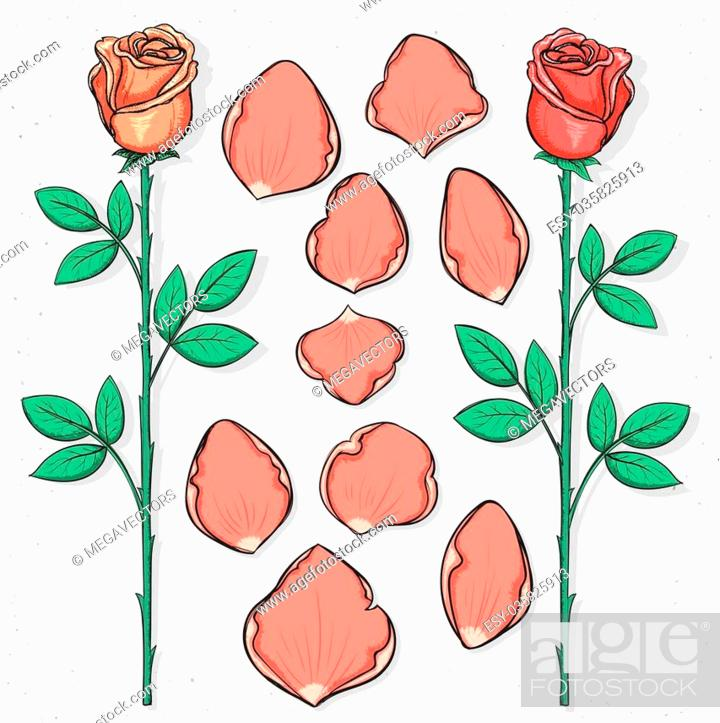 Stock Vector: Isolated rose and petals handmade in sketch style. Sketch of flower. Roses petals for design cards and posters, collages and presentations, web design.