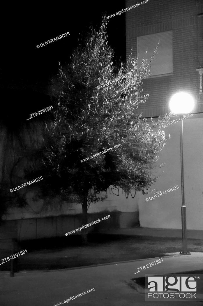 Imagen: Street lamp and tree. La Bañeza, Leon Province, Spain.