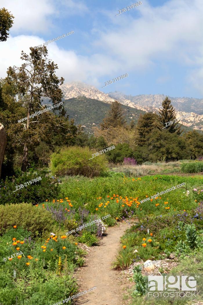 Stock Photo: Flowers in bloom and view of mountains at the Santa Barbara Botanic Garden, Santa Barbara, CA, USA.