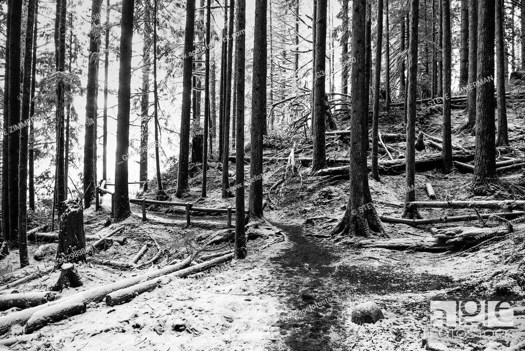 Stock Photo: Winter Woods. Wallace Falls, Washington, USA.
