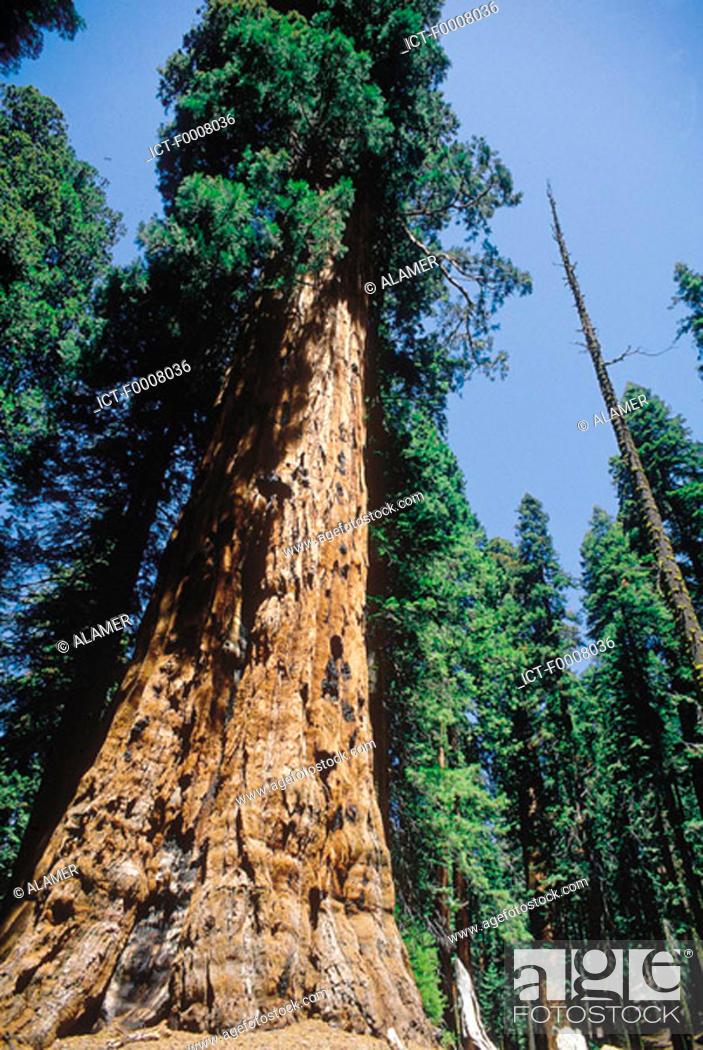 Stock Photo: United States,  USA, California, Sequoia National Park.
