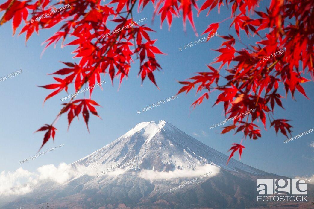 Stock Photo: Momiji (Acer palmatum) leaves, Mount Fuji, Japan.